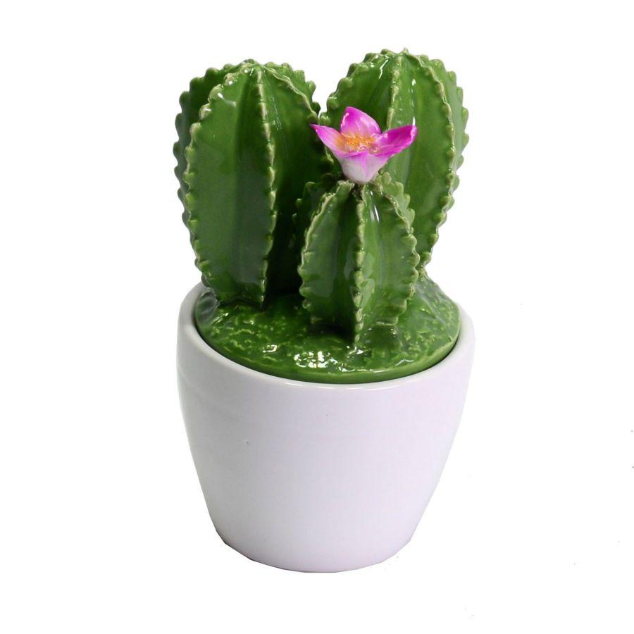 bomboniera scatolina cactus