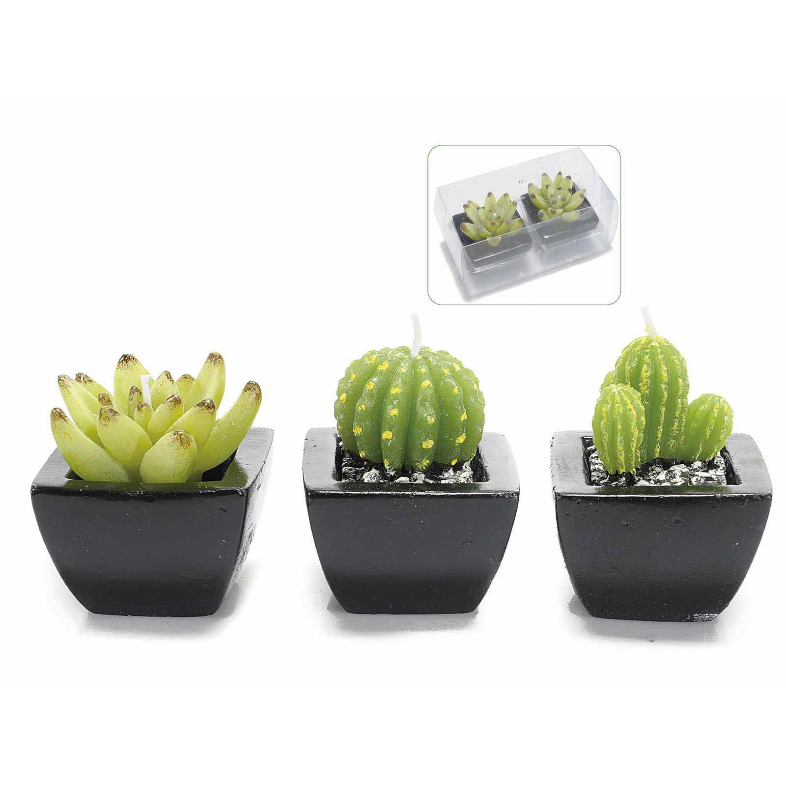 Candele cactus
