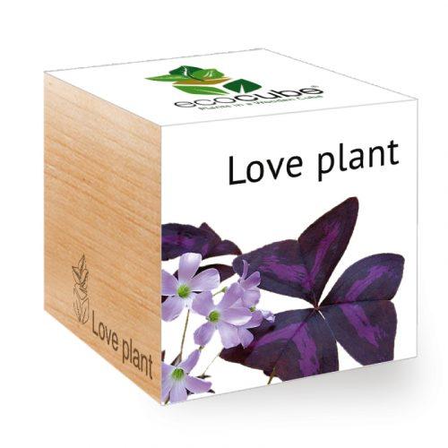 bomboniere-piante-amore