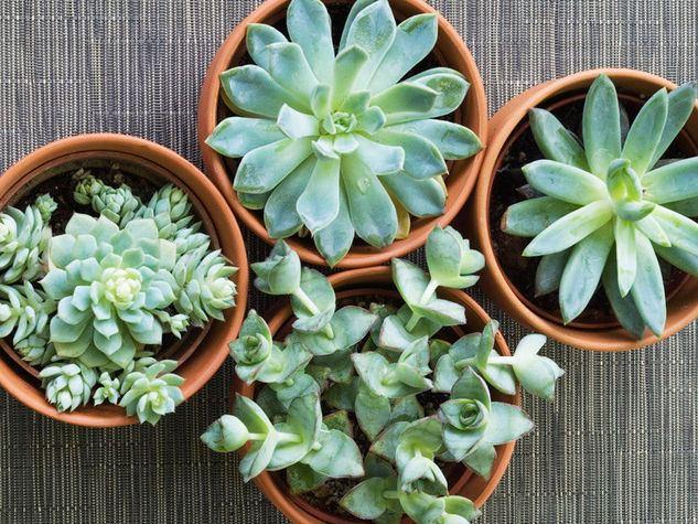 bomboniere-piante-grasse