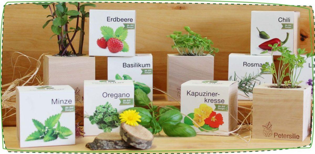 bomboniere piante