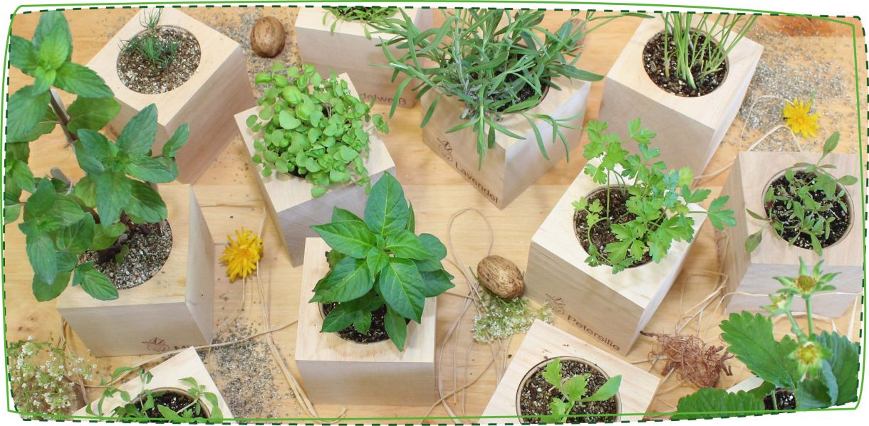 bomboniere-piante-slideshow3